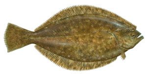 Louisiana Flounder Fishing Charters In Venice La with Guides From VooDoo Fishing Charters