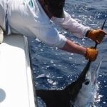 Deep Sea Offshore Marlin Fishing Charters in Venice Louisiana