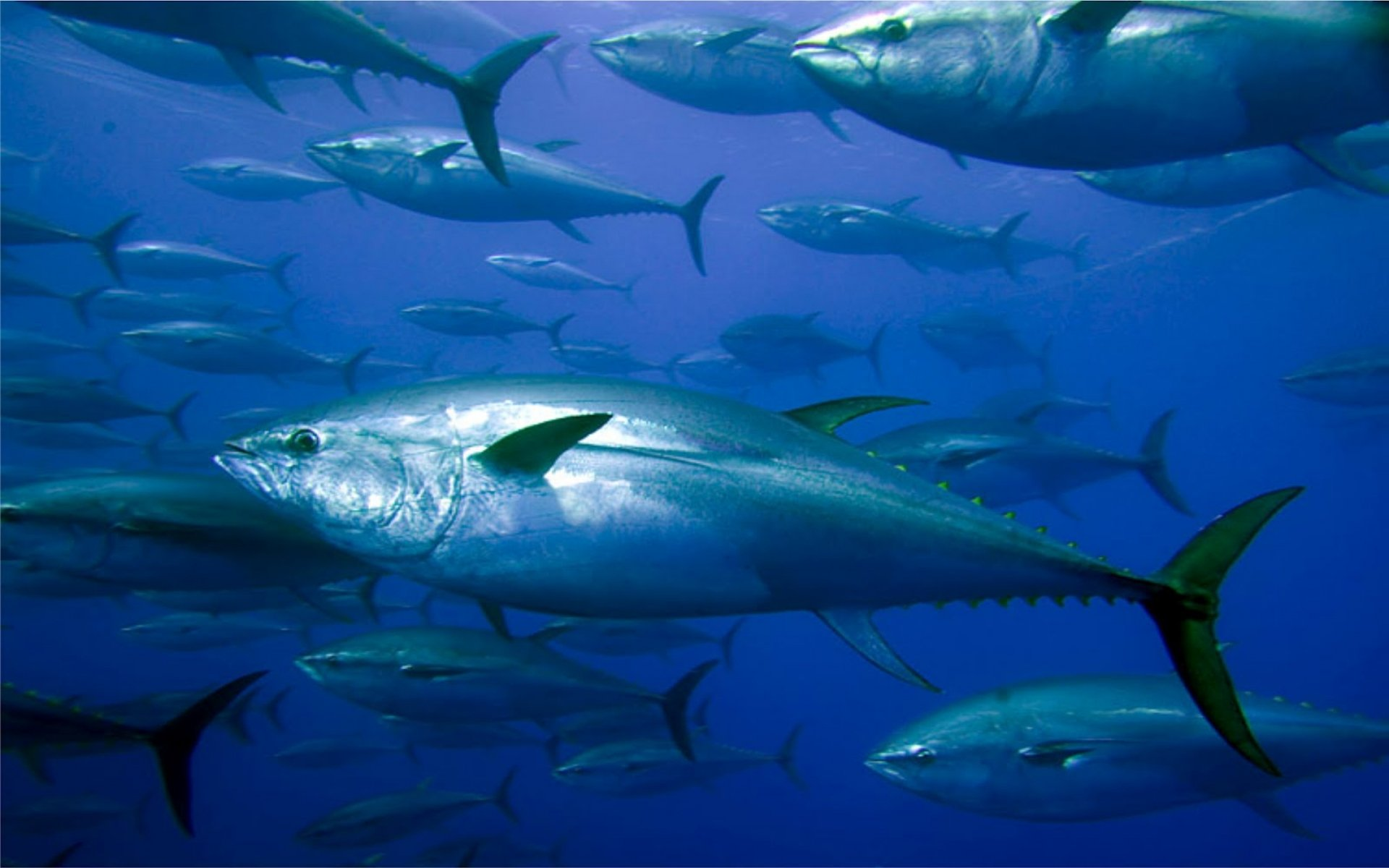 Get to know voodoo fishing charters very experienced for Tuna fish can